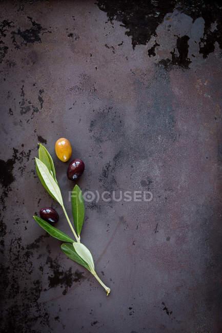 Du haut de la branche verte avec des olives vertes et noires placées sur un fond sombre et grondeux — Photo de stock
