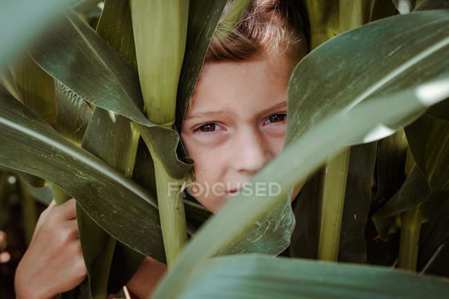 Petit garçon marchant parmi le champ de maïs — Photo de stock