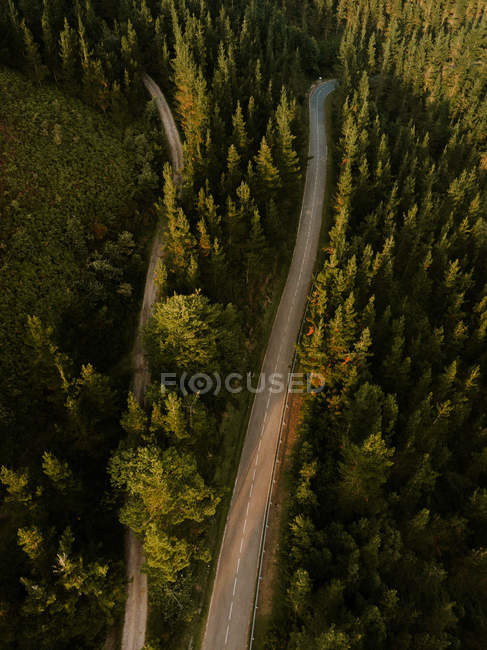 Asphalt rural roads in green woods — Stock Photo