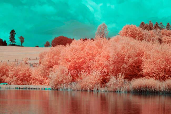 Роща покрыта деревьями с пышной листвы недалеко от тихого озера на фоне облачного неба — стоковое фото
