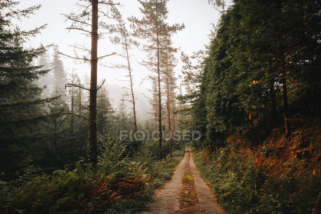 Rural path in calm green forest in daylight — Stock Photo