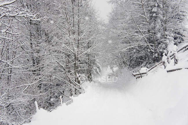 Snowy landscape with trees in winter — Stock Photo
