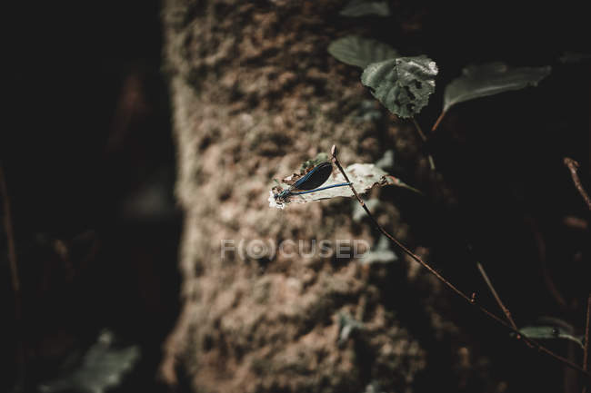 Nahaufnahme einer erstaunlichen Libelle, die über grüne Blätter und Äste im Wald fliegt — Stockfoto
