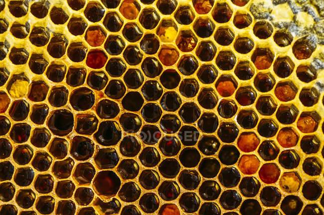 Крупным планом органических Золотой Сотовый фона — стоковое фото
