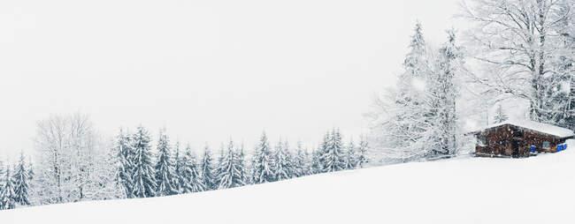 Paisaje nevado con árboles en invierno - foto de stock