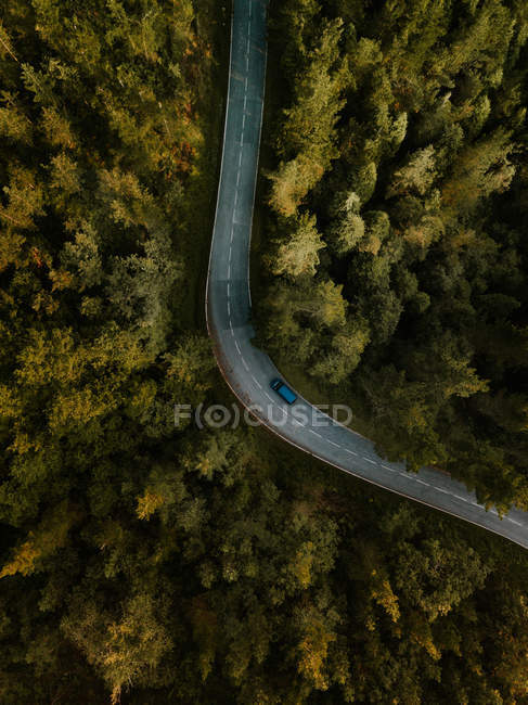 Car driving on rural road in green woods — Stock Photo