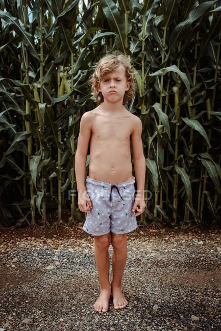 Niño en pantalones cortos en el maizal - foto de stock