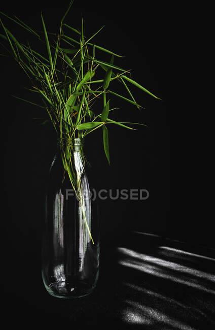 Leaf of tropical plant inside in a bottle.Green, wild, background.Table and black background — Stock Photo