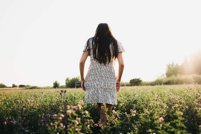 Vue arrière d'une femme marchant sur un champ ensoleillé — Photo de stock