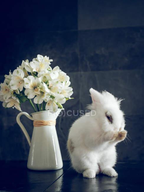 Fluffy rabbit and white flowers in vase on dark background — Stock Photo
