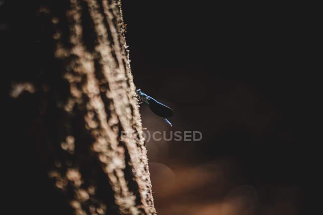 Знімки прекрасної бабки сидять на корі стовбура дерева на розмитому тлі лісу. — стокове фото
