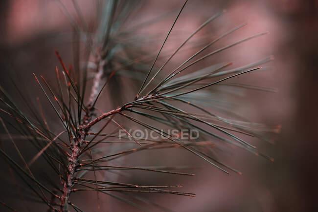 Rama de primer plano con pequeñas hojas verdes en el bosque. - foto de stock