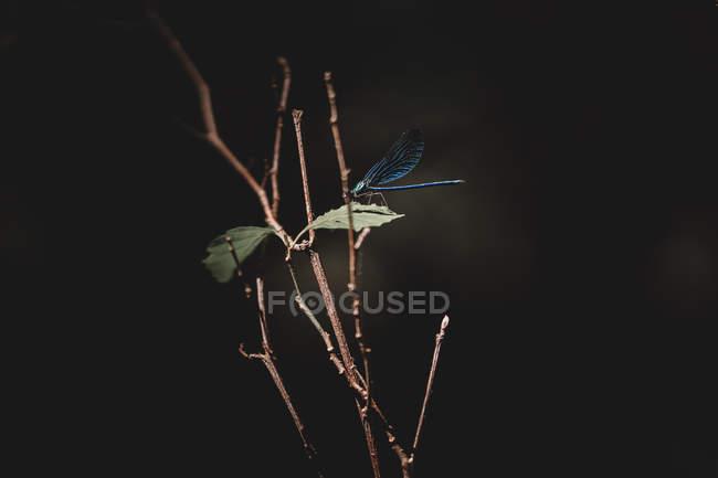 Libelle fliegt über Blätter und Zweige, Nahaufnahme — Stockfoto