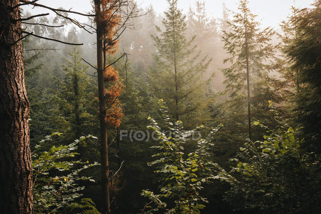 Calm green picturesque forest in daylight — Stock Photo