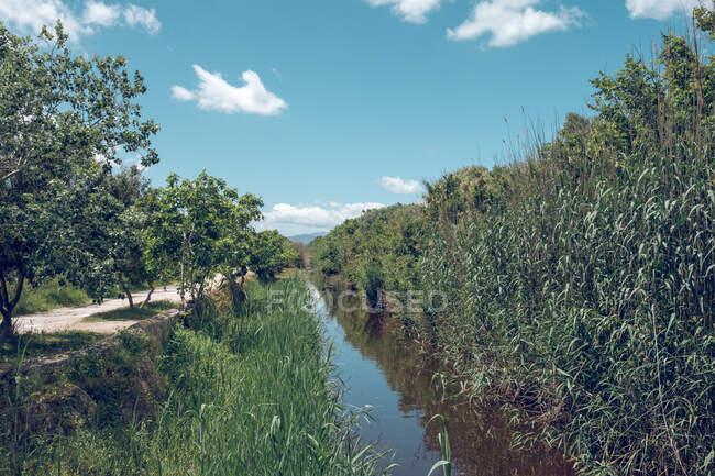 Hermosa vista de la naturaleza del río hierba alta y árboles con cielo azul y nubes blancas - foto de stock