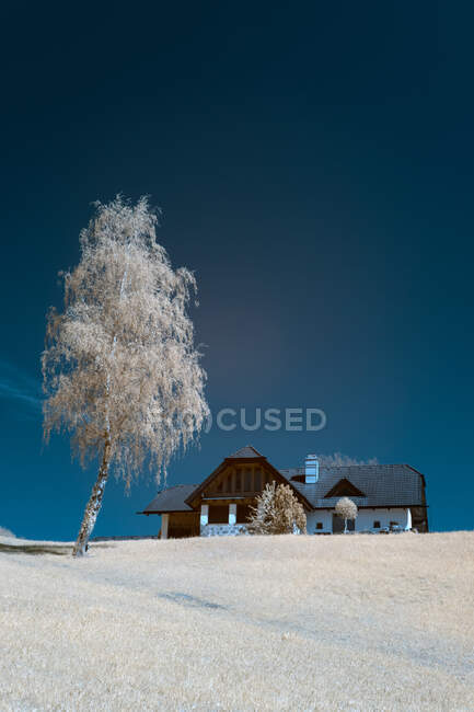 Infrared shot of nice trees growing near countryside house on small hill on background of clear sky — Stock Photo
