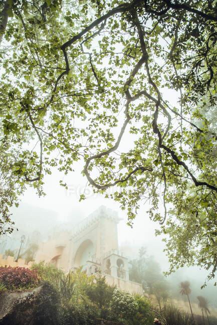 Vista de la exuberante vegetación verde en el parque con árboles altos y pasarela pavimentada en luz brillante, Portugal - foto de stock