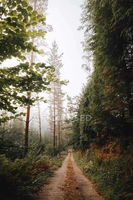 Rural path in calm green picturesque forest in daylight — Stock Photo
