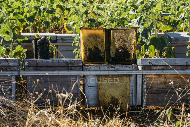 Honey bee frames outdoors — Stock Photo
