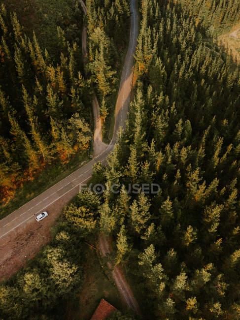 Асфальтированная сельская дорога в зеленом цвете — стоковое фото