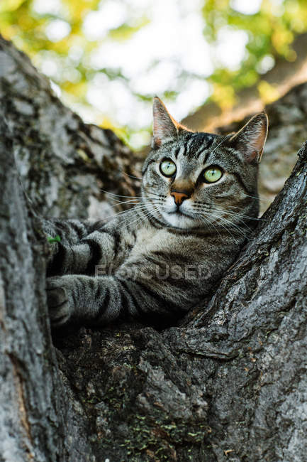 Curious stripped cat lying on tree and looking away — Stock Photo