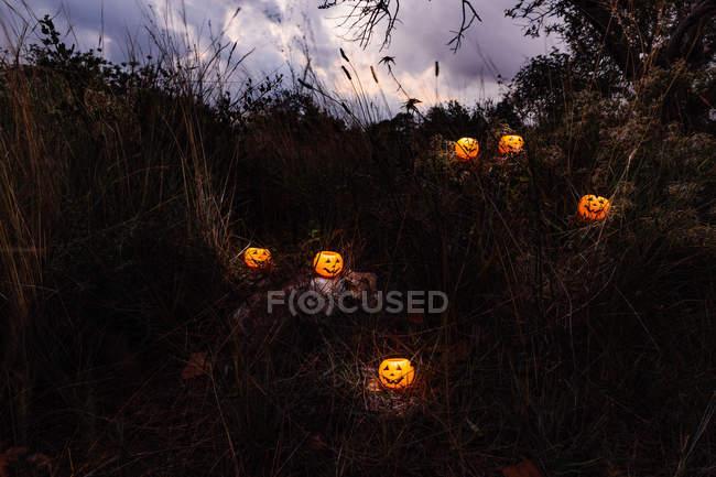 Citrouilles d'halloween lumineux dans la forêt sombre — Photo de stock