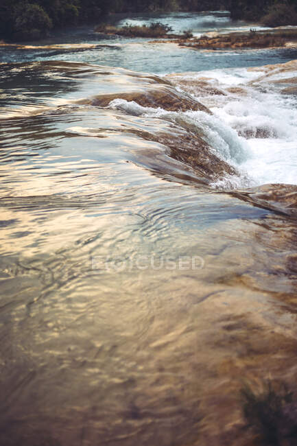 Yellow leaves floating in water of small stream in amazing Mexican jungle — Stock Photo