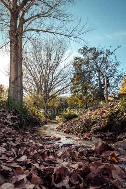 Árvores nuas e fluxo na luz solar sob o céu azul — Fotografia de Stock