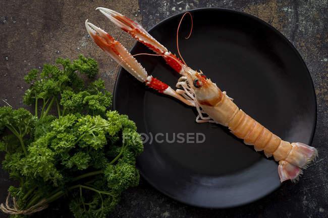 Camarones cocidos en plato negro con manojo de perejil fresco - foto de stock