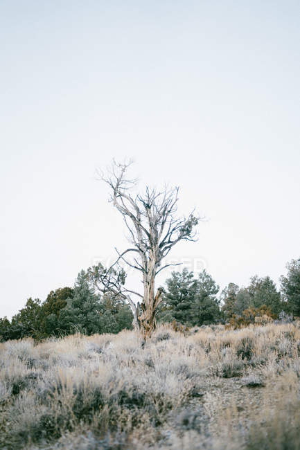 Old tree growing on hill in nature — Stock Photo