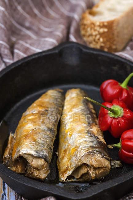 Консервированные сардины и свежий красный стручковый перец в сковороде — стоковое фото