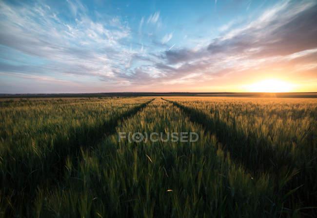 Яркое небо заката над диким зеленым полем — стоковое фото