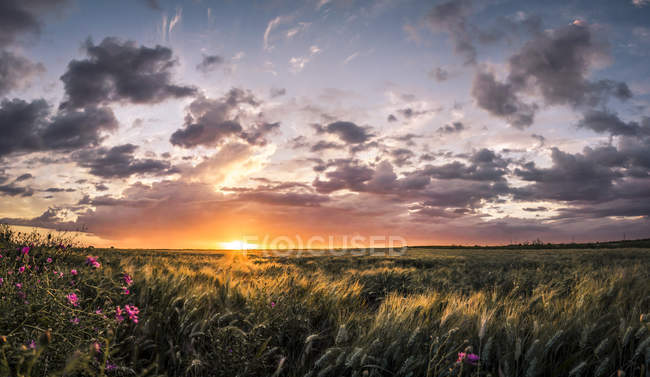 Remote green field with waving grass at sunset light with dramatic sky — Stock Photo