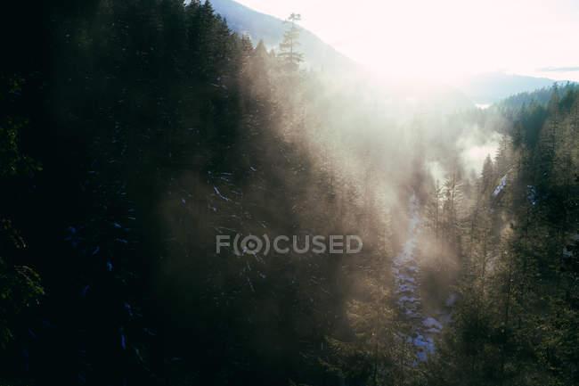 Туман в солнечном свете над скалистой снежной долиной с ручьем, текущим вниз среди хвойных деревьев — стоковое фото