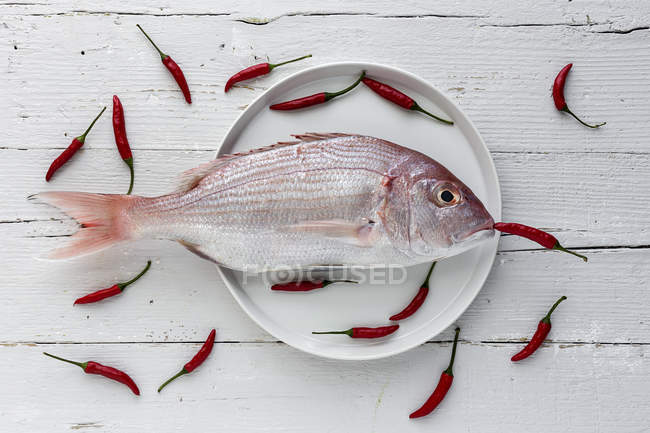Raw sea bream on white plate on wooden tabletop with small red peppers — Stock Photo