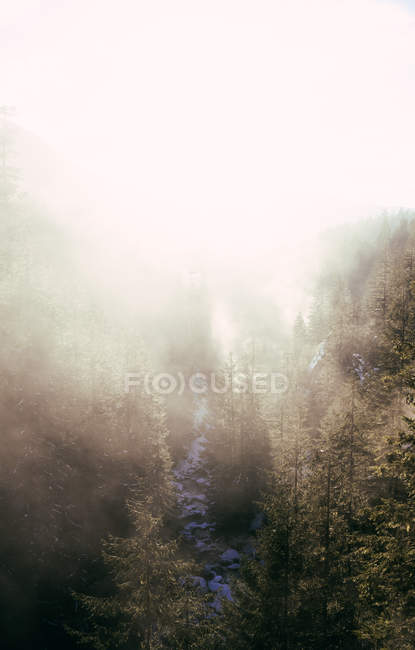 Fog in sunlight above rocky snowy valley with stream flowing down among coniferous trees — Stock Photo