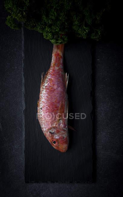 Bando de salsa e salmoura vermelha crua na ardósia preta — Fotografia de Stock