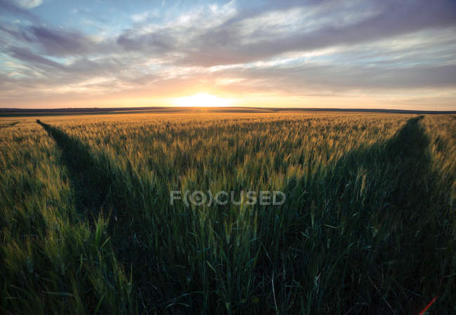 Ciel de coucher de soleil lumineux au-dessus du champ vert sauvage — Photo de stock