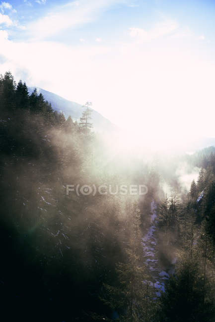 Niebla en luz del sol sobre el valle rocoso cubierto de nieve con la corriente que fluye hacia abajo entre los árboles coníferos - foto de stock