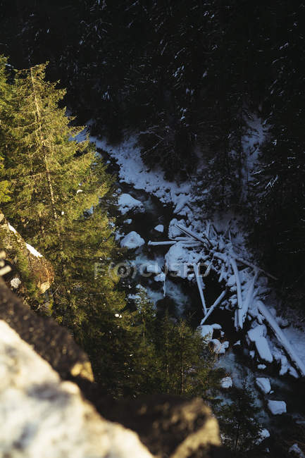 Water stream flowing among rocks and trunks in snow with coniferous trees around — Stock Photo