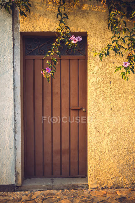 Tree twigs with elegant pink flowers hanging near wooden door of building in Oaxaca, Mexico — Stock Photo