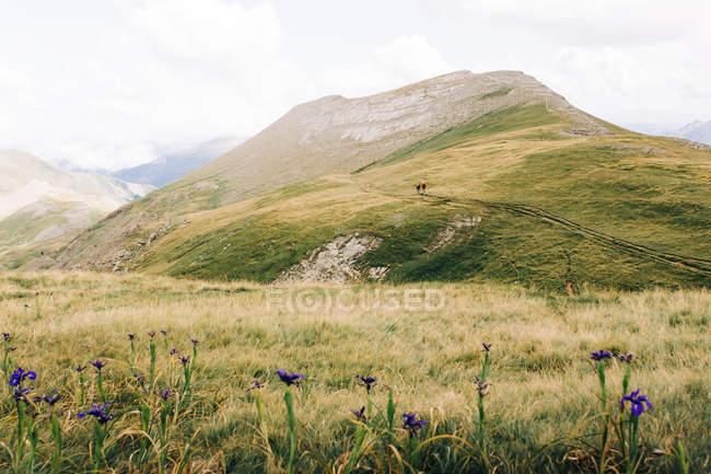 Voyageur marchant le long de la crête de montagne verte dans la nature — Photo de stock