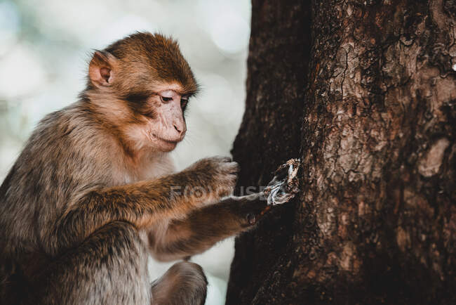 Little cute monkey sitting on branch of tree on blurred background — Stock Photo