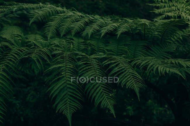 Feuilles vertes luxuriantes de plantes poussant en forêt sombre — Photo de stock