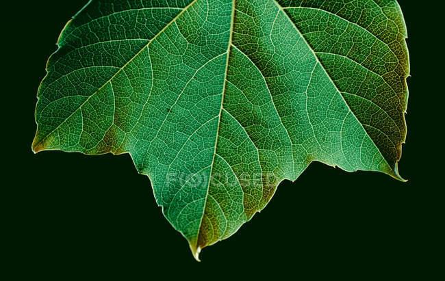 Макропредставление текстуры зеленого листа — стоковое фото