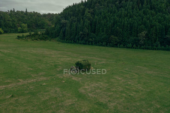 Маленький домик посреди поля, покрытый травой на фоне леса — стоковое фото