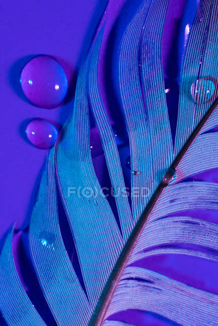 Droplets of fresh water on wet bird feather in violet illumination — Stock Photo