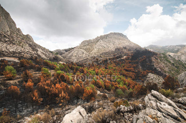 Destroyed burned trees in mountain forest — Stock Photo