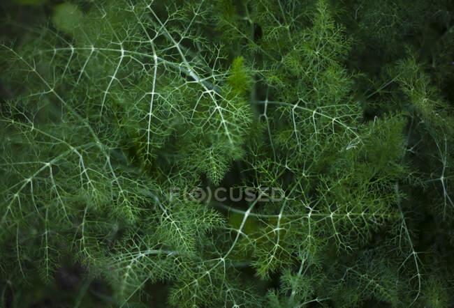 Gros plan de la vue de dessus de l'herbe verte luxuriante qui pousse dans la forêt sombre — Photo de stock