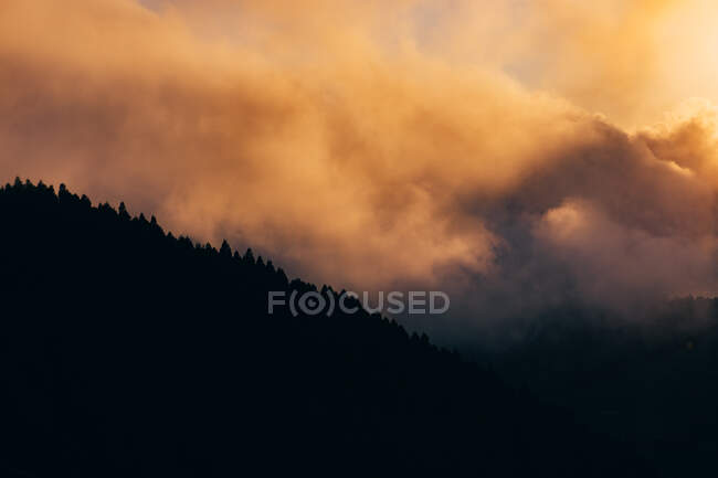 Mountain with trees covered with thick mist at sunset — Stock Photo